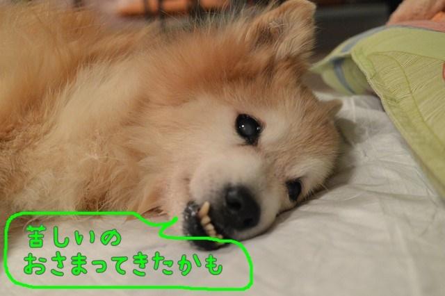 c-DSC_8059.jpg