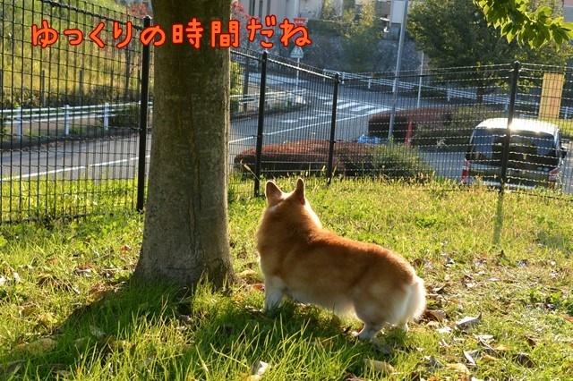 c-DSC_8129.jpg