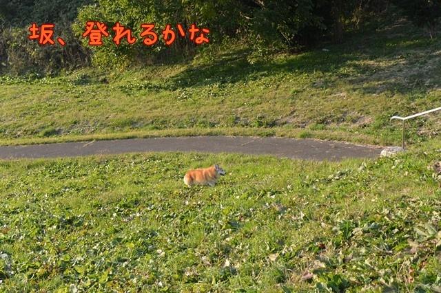 c-DSC_8131.jpg