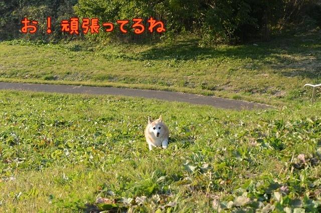 c-DSC_8135.jpg