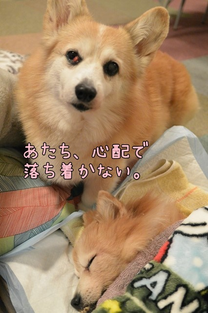 c-DSC_8346.jpg