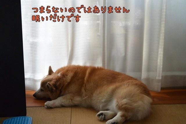 c-DSC_8577.jpg
