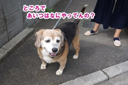 あんこ 3