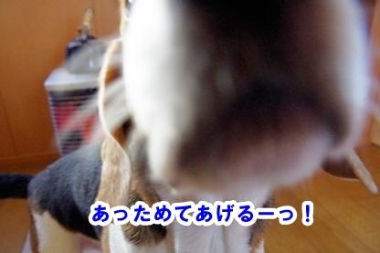 平ちゃん 5