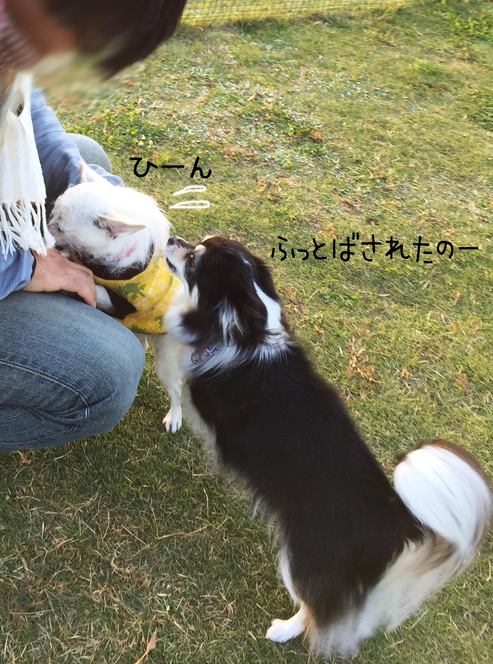 1711泣きつく姉妹02