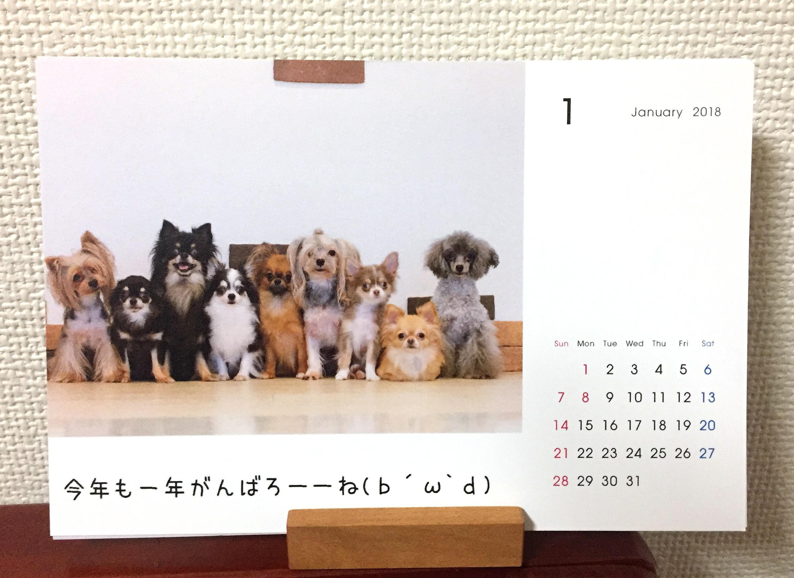 1711_1月の犬子たち