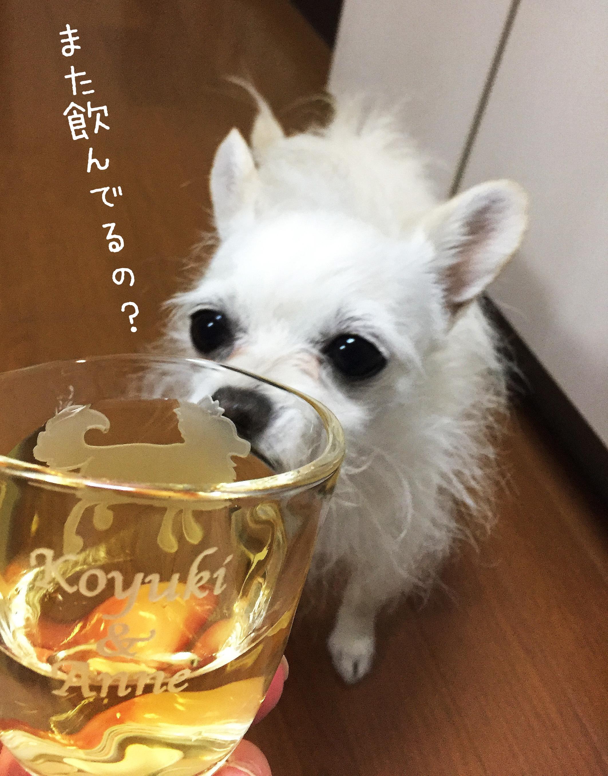 1705こゆとグラス_02