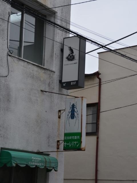 171011-150251-宇都宮20171011 (634)_R