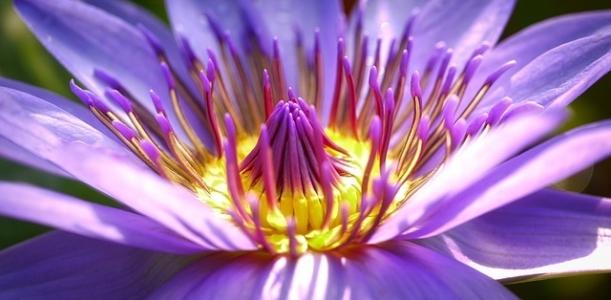 flower-2919284_640.jpg