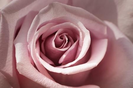 rose-2985620_640.jpg