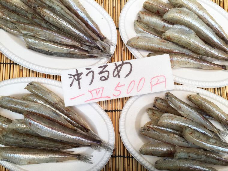 沖ウルメ500円