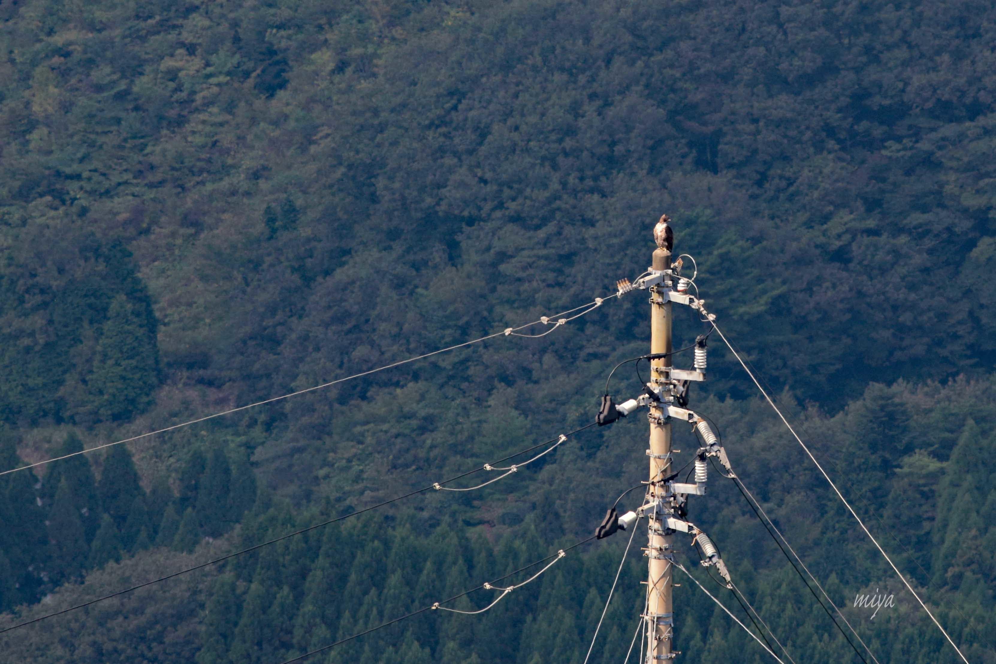 くま電m032A8707