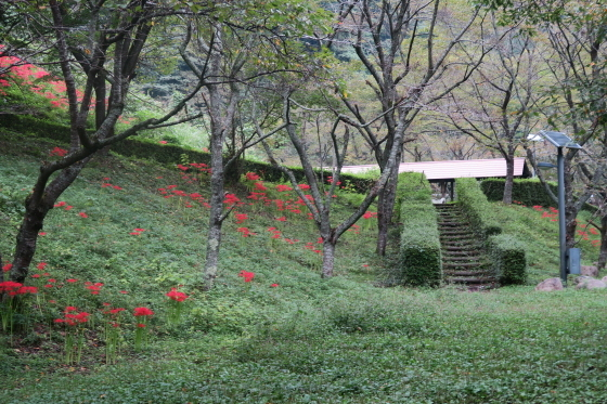 新平ヶ原キャンプ場1
