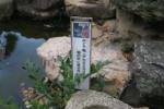 亀山八幡宮10
