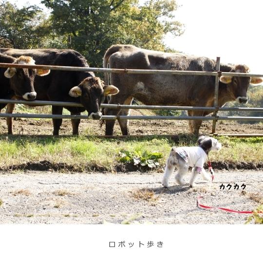 吉田牧場7
