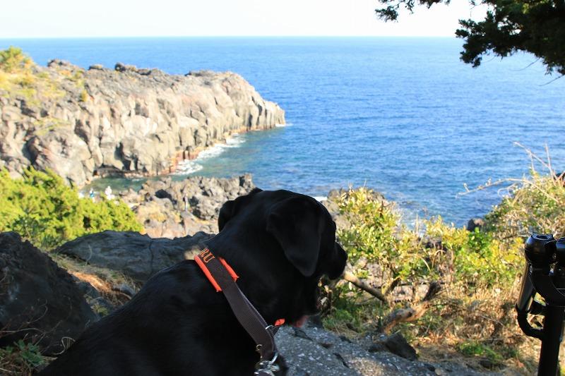 海を見るマル