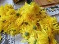 """""""菊ちらし""""とは、花びらを摘む下準備のことです"""