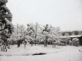 雪が積もり、寒さの次元が変わったような…(((´`)))