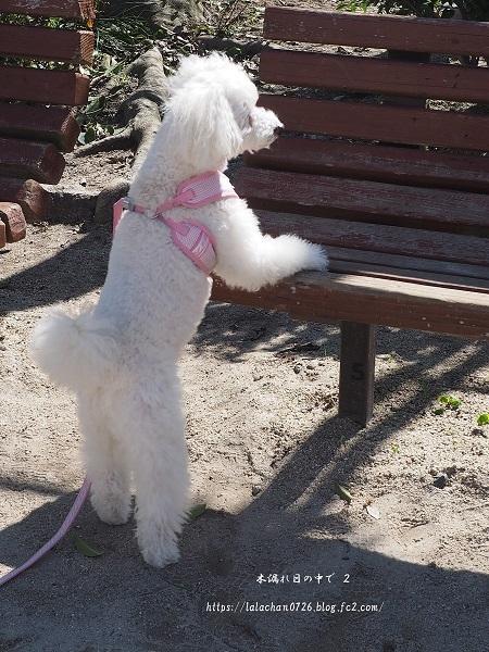 お昼の公園1