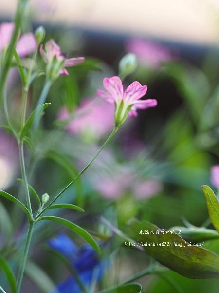 かすみ草と2