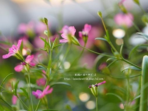 かすみ草と1