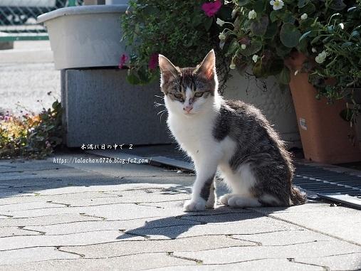 子猫さん2