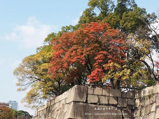 石垣も紅葉