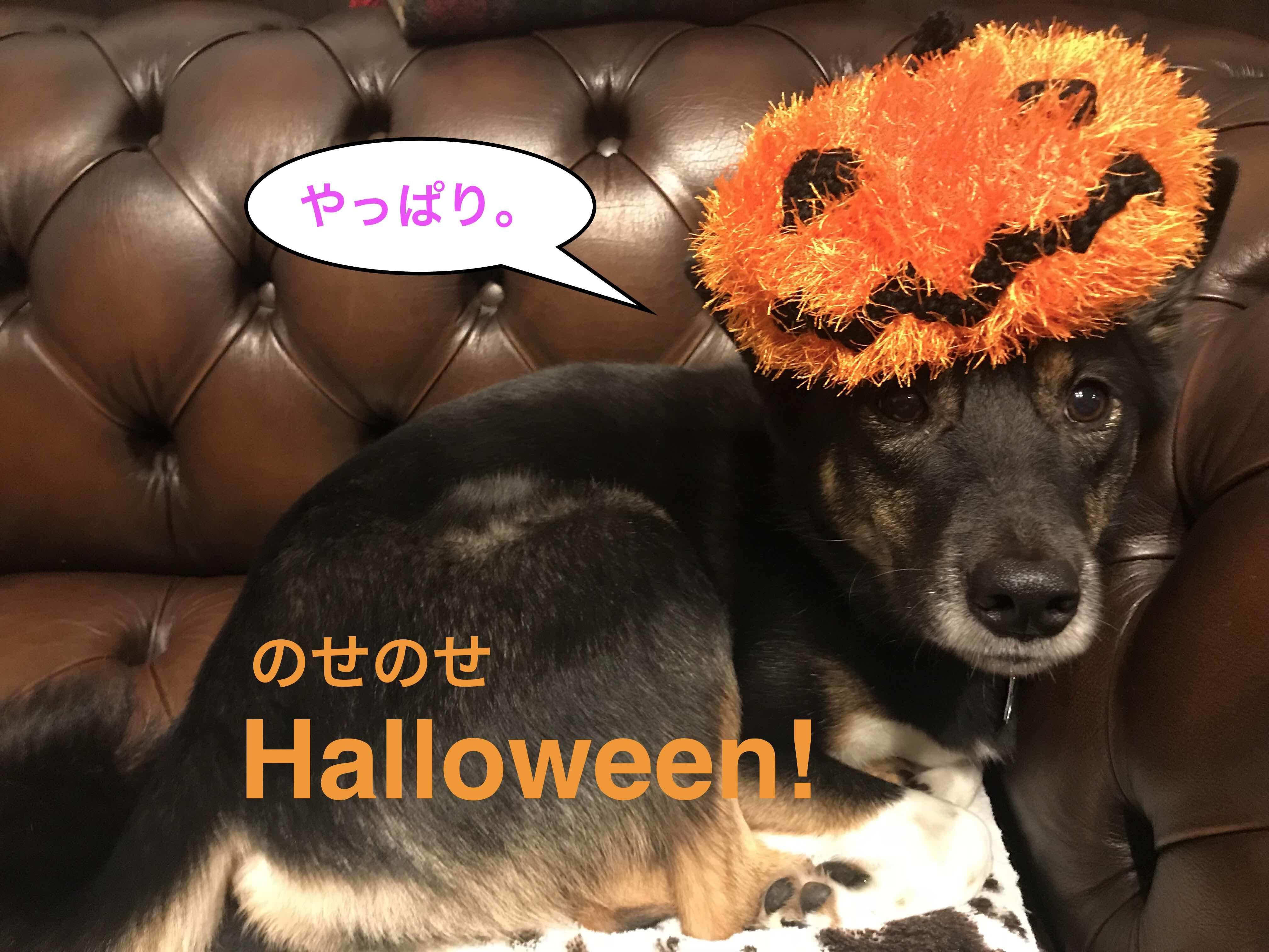 2017-10-31_20-29-41_848.jpg