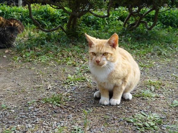 池の畔にて猫