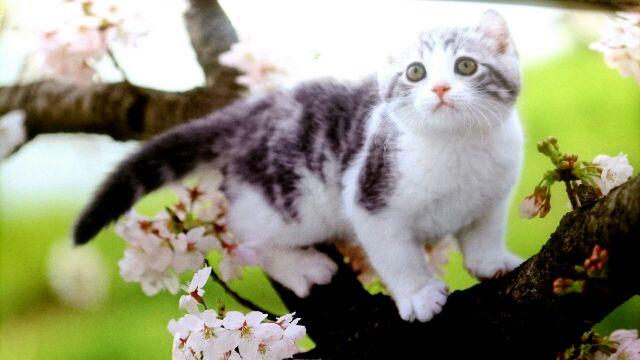 カレンダー桜和猫2017
