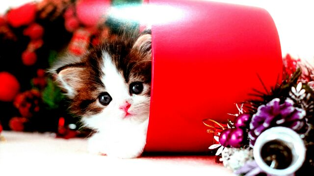 カレンダークリスマス猫2017