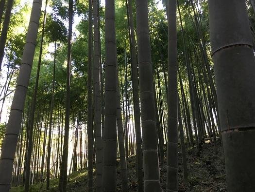 京都905