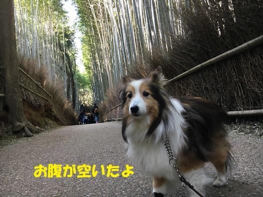 京都904