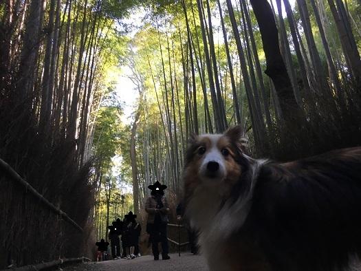 京都901