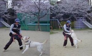 桜、母さんと♪