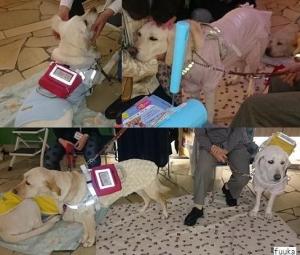 1125-介助犬