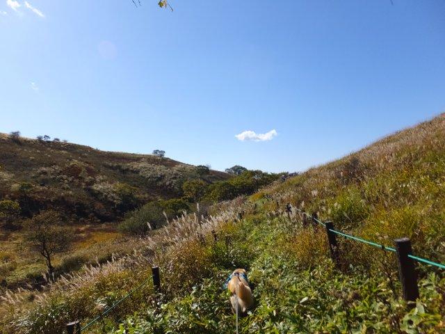 霧ヶ峰高原 2017.9.30 027