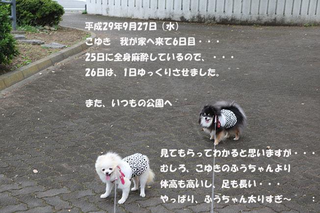 0A1A4620-987654567-98765.jpg