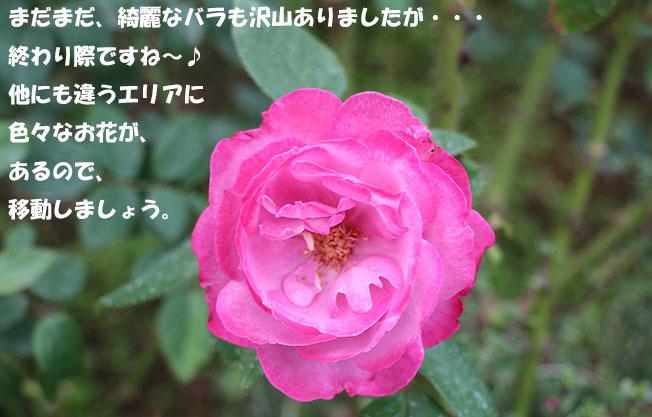 0A1A5006-987654567.jpg