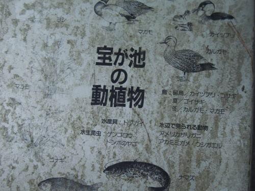 DSCNmaki2518.jpg