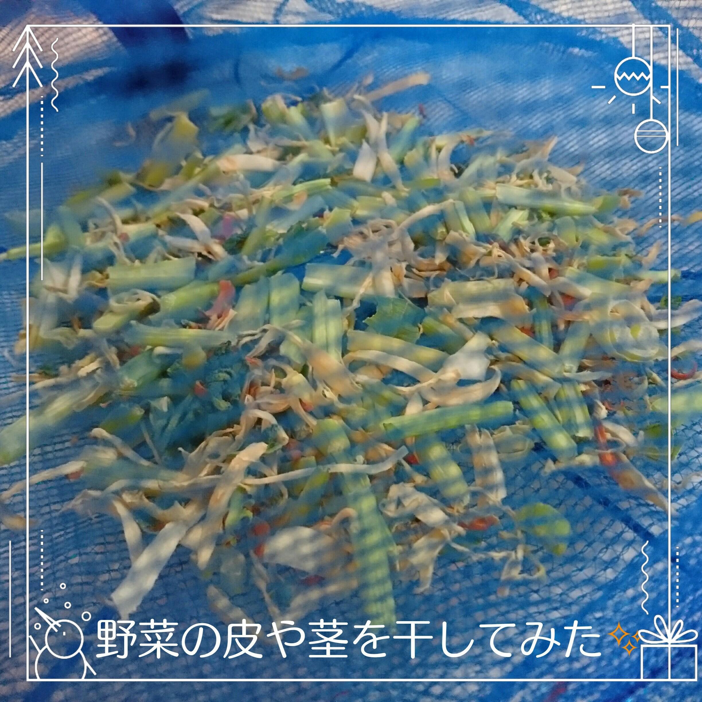 moblog_9ddd1bed.jpg