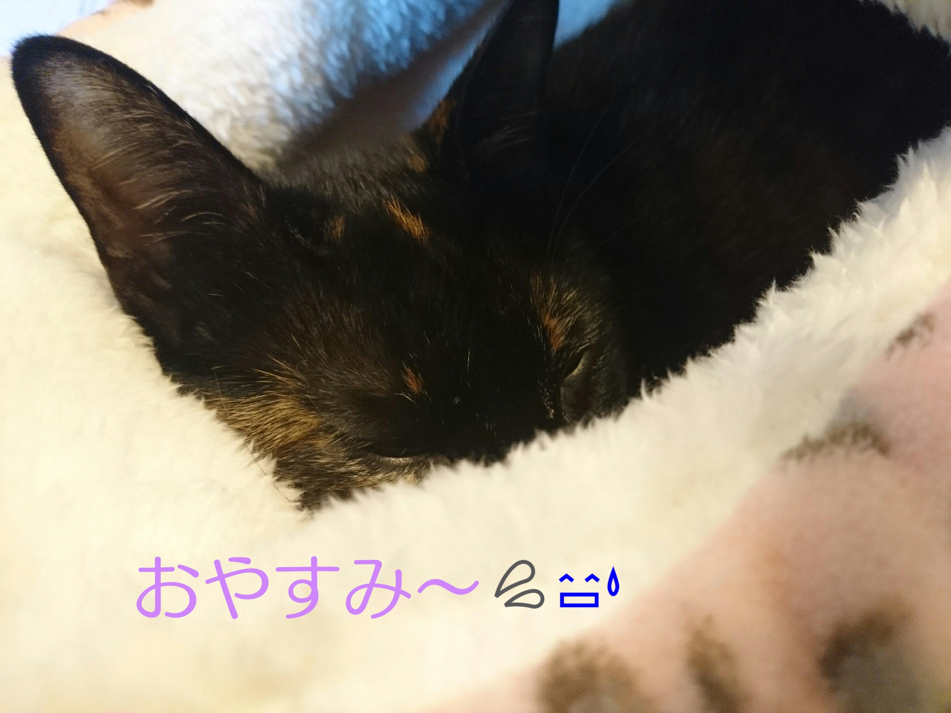 moblog_e9806a0f.jpg