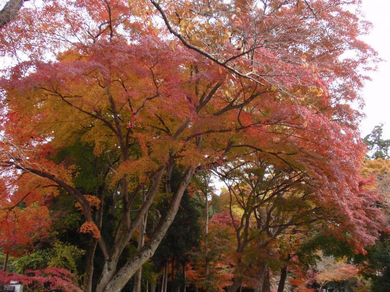鷺森神社4