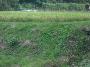 170929道から撮った田