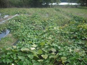171025池のそばの圃場2