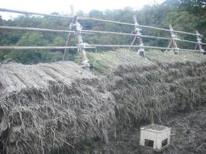 171027稲を掛け終える
