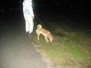 171115散歩1まだ暗いな