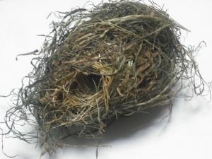 171121鳥の巣1