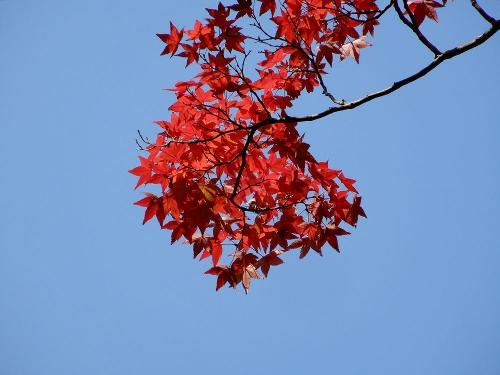紅葉の色が