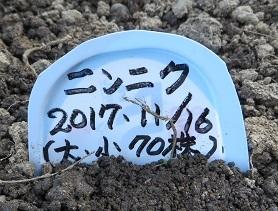 畑畝・野菜1